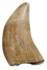 Dent de Cachalot