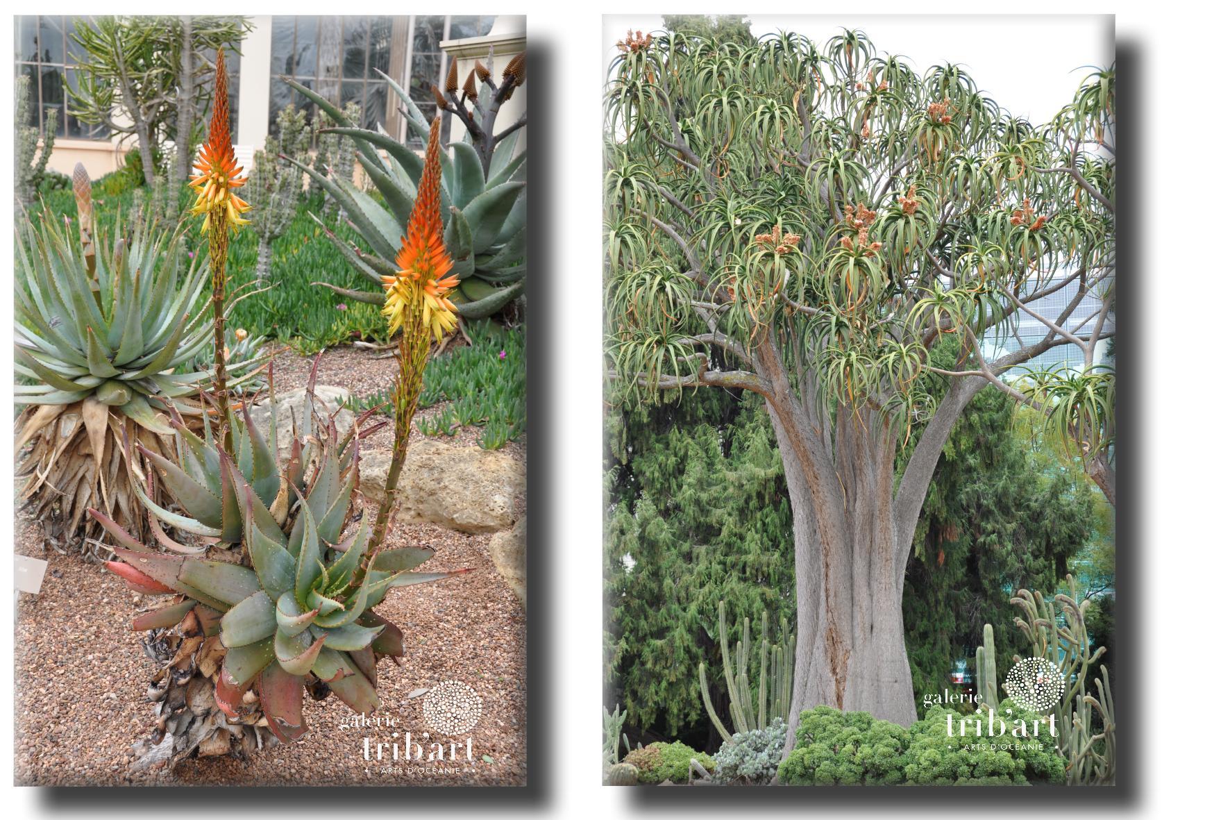 Adelaïde jardin botanique 2