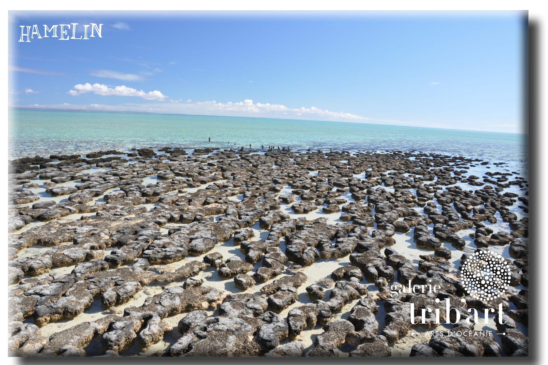 shark bay stromatolithes