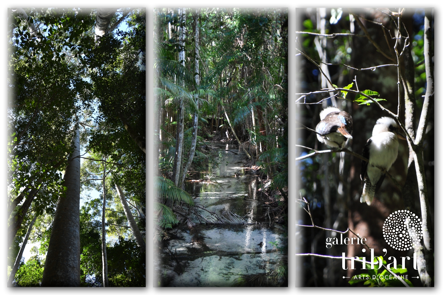 Fraser Island 2019 Couv (page 8)